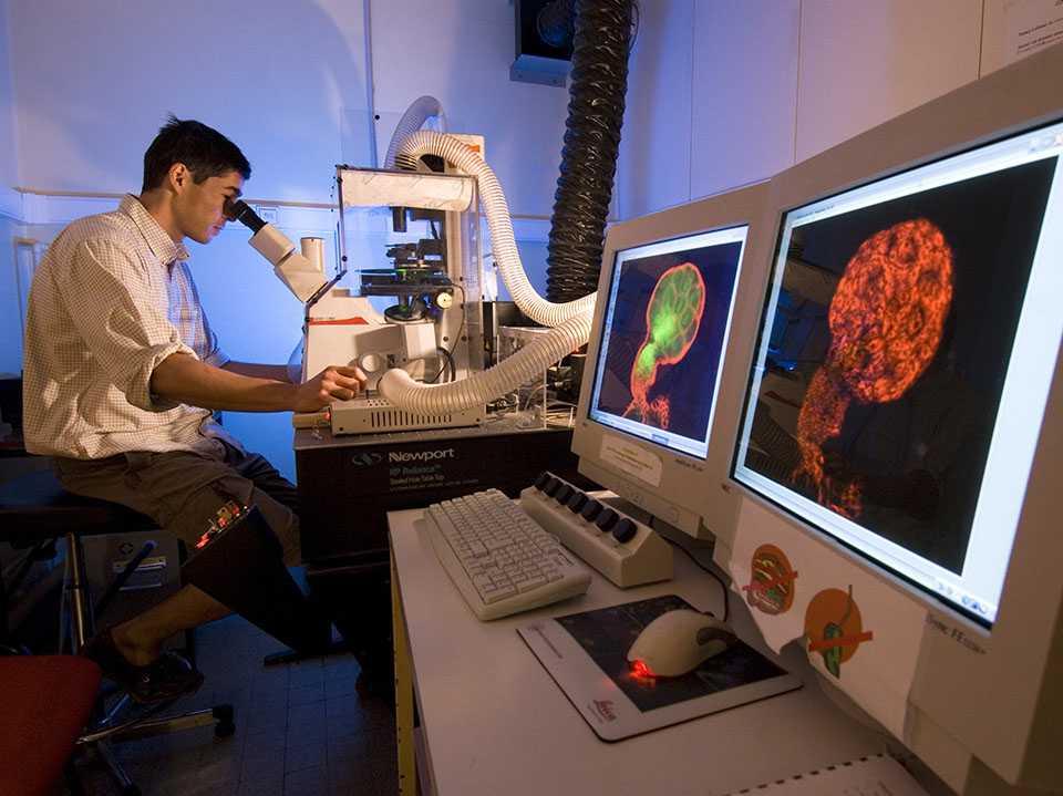 در آزمایشگاه: درحال استفاده از یک میکروسکوپ فلورسانس هم کانون